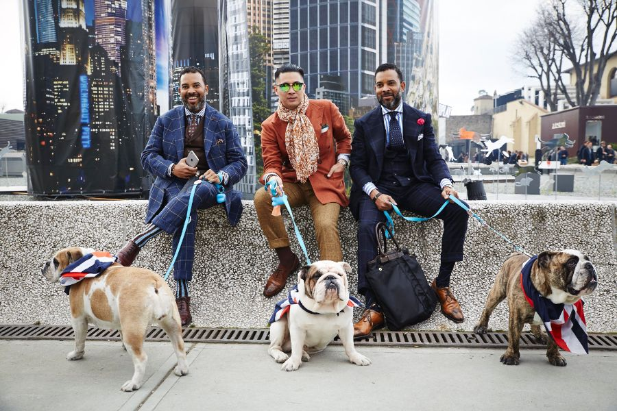 I psi jsou tu vyladění. Zdroj: pittimmagine.com