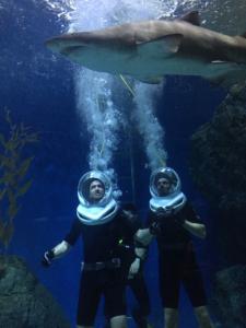 LM se potápí se žraloky